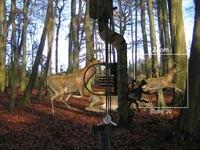 Caccia Al Cervo Con L'Arco