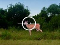 Caccia Al Cervo In Kansas